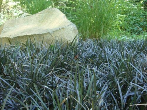 """Scott Hokunson"" ""Blue Heron Landscape Design"""