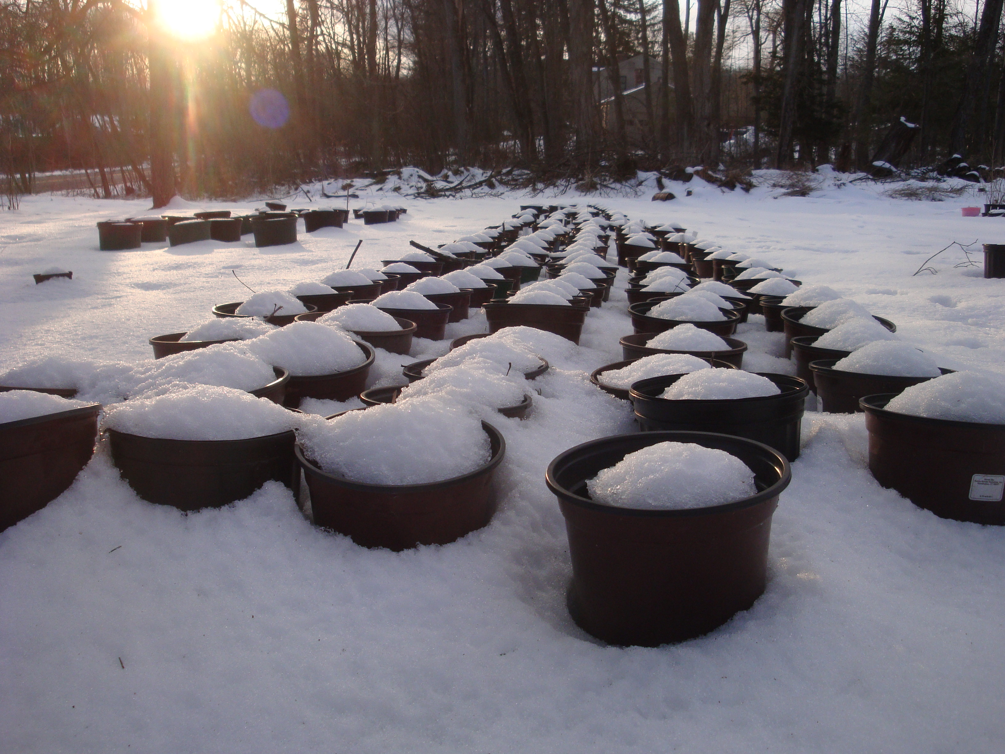 The sun sets on an early spring day in the nursery, and it appears that planting season will be delayed a bit...