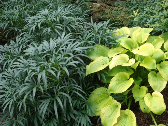 Hosta and Hellebore thrive in the shade garden