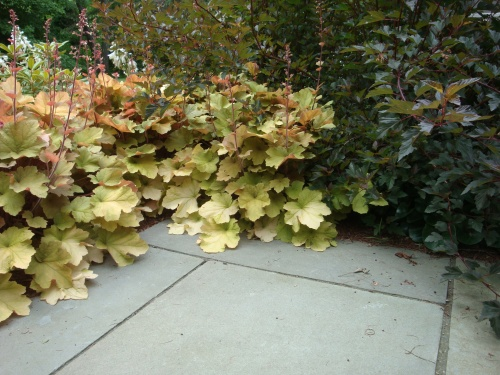 Heuchera 'Caramel' and 'Summer Wine' Ninebark add color and soften the edges of this bluestone patio