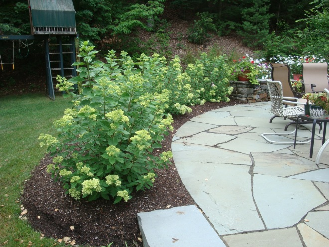 'Little Lime' Hydrangea defines the space by  creating a hedge and offering privacy from the street below