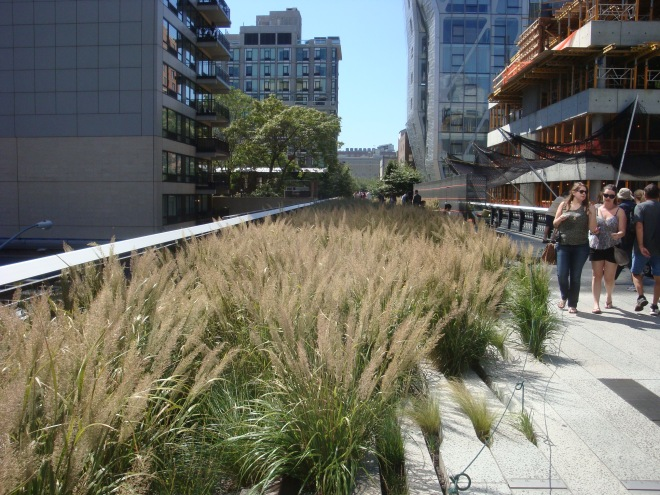 Foxtail Grass (Calamagrostis brachytricha)
